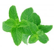 Mint pure and natural essential oil ME88810 1 KG