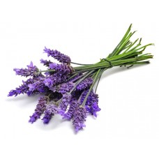 Lavender pure and natural essential oil LA88180 1 KG