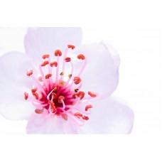 Sakura Flower 80199/D 1 KG